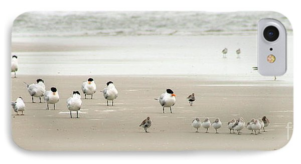A Gaggle Of Seabirds IPhone Case by Angela Rath