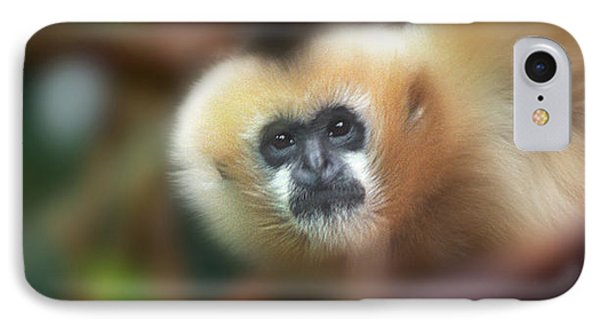 A Gibbon's Stare IPhone Case by Greg Slocum