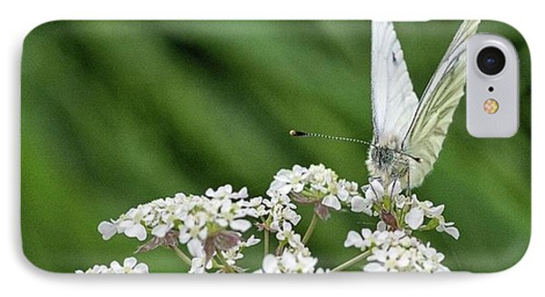 A Green-veined White (pieris Napi) Phone Case by John Edwards