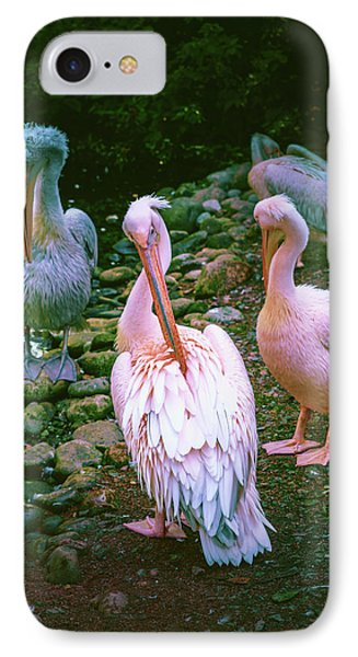 a group of swans near the pond on a Sunny summer day IPhone Case