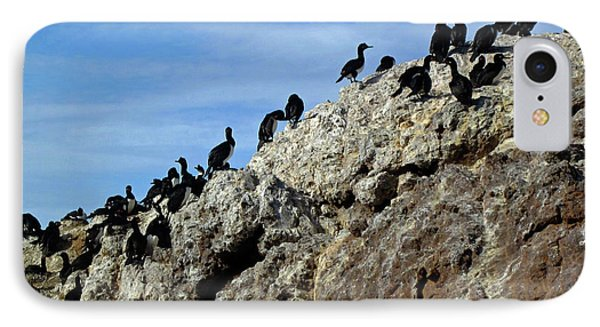 A Gulp Of Cormorants IPhone 7 Case by Sandy Taylor