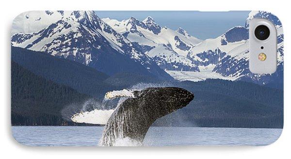 A Humpback Whale Leaps  Breaches IPhone Case