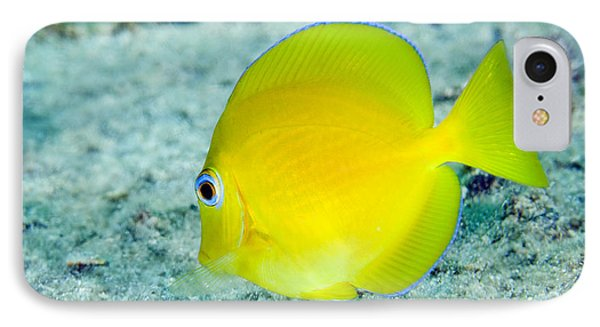 A Juvenile Blue Tang Searching Phone Case by Terry Moore