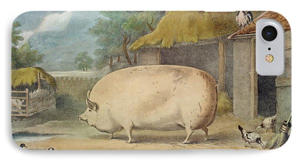 A Leicester Sow IPhone Case by William Henry Davis