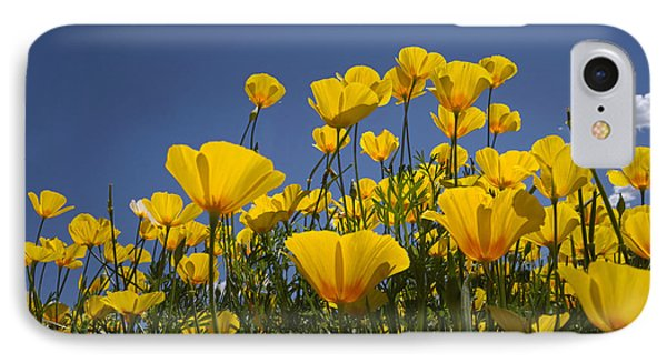 A Little Sunshine  IPhone Case by Lucinda Walter