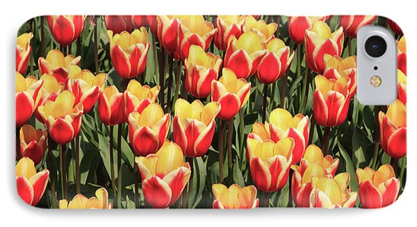 A Lot Of Red And Yellow Tulips IPhone Case