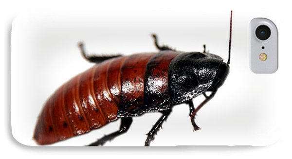 A Madagascar Hissing Cockroach Phone Case by Michael Ledray