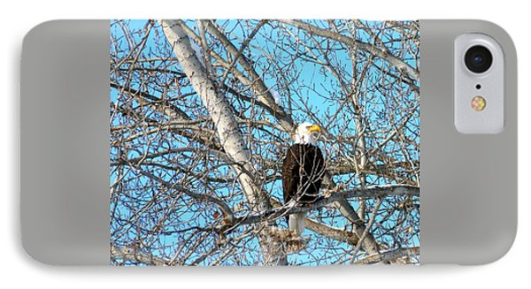 IPhone Case featuring the photograph A Majestic Bald Eagle by Will Borden