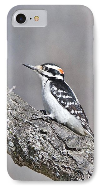 IPhone Case featuring the photograph A Male Downey Woodpecker 1120 by Michael Peychich