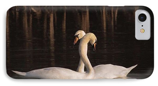 A Painting Of A Pair Of Mute Swans IPhone Case by John Edwards