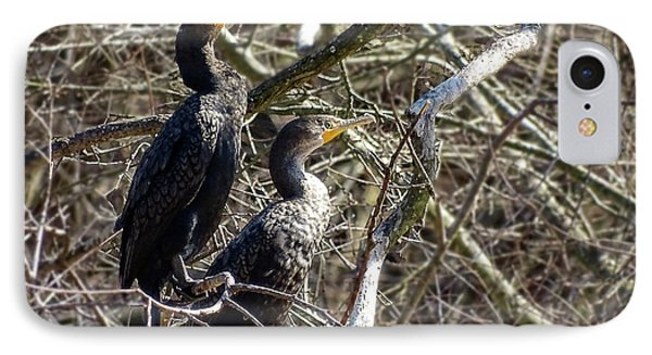 A Pair Of Cormorants IPhone Case by Melissa Messick