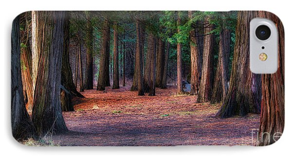 A Path Of Redwoods IPhone Case