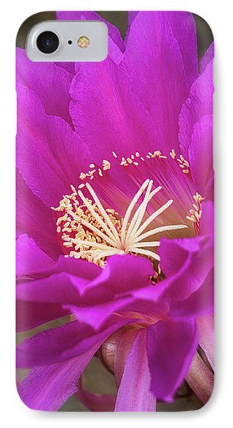 IPhone Case featuring the photograph A Pink Punch  by Saija Lehtonen