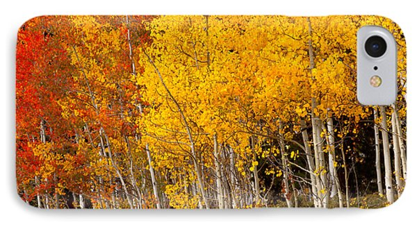 A Place In The Aspen Forest IPhone Case by Tim Reaves