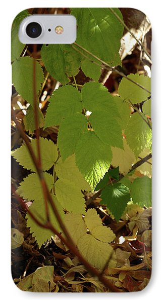 A Plant's Various Colors Of Fall IPhone Case