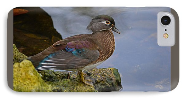 A Pretty Female Painted Wood Duck IPhone Case by Judy Wanamaker