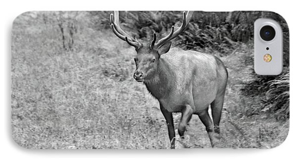A Rack Of Antlers - Roosevelt Elk - Olympic National Park Wa Phone Case by Christine Till
