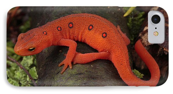 A Red Eft Crawls On The Forest Floor IPhone 7 Case
