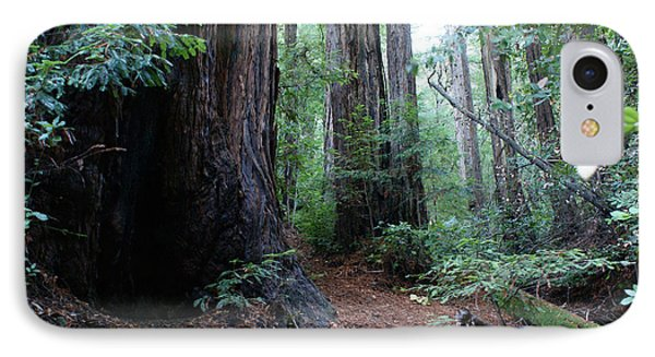 A Redwood Trail Phone Case by Ben Upham III
