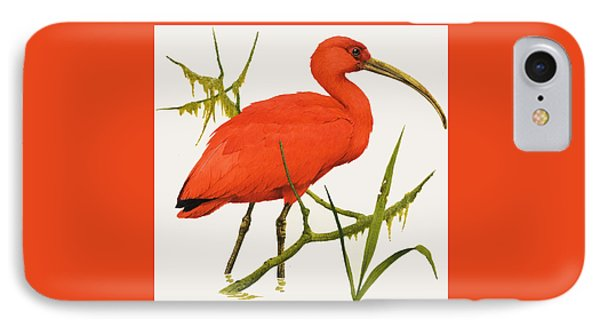 A Scarlet Ibis From South America IPhone Case by Kenneth Lilly
