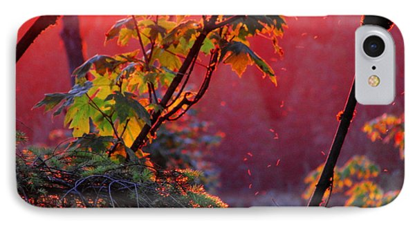A Season's  Sunset Dusting IPhone Case
