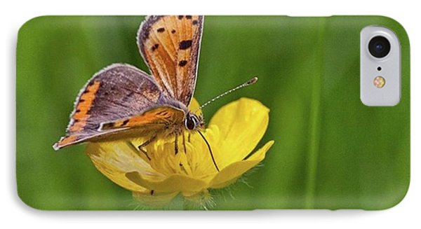 A Small Copper Butterfly (lycaena IPhone Case by John Edwards