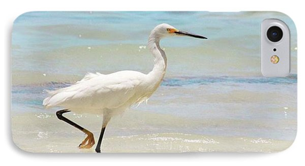 A Snowy Egret (egretta Thula) At Mahoe IPhone Case