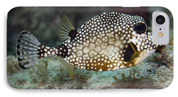 A Spotted Trunkfish, Key Largo, Florida IPhone Case