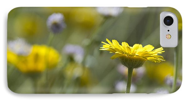 A Spring Daisy IPhone Case by Sue Cullumber