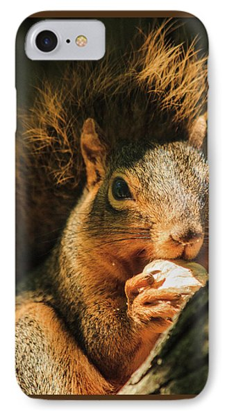 A Squirrel And His Nut IPhone Case by Joni Eskridge