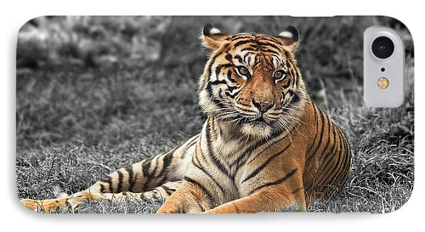 A Tiger Relaxing On A Cool Afternoon II IPhone Case by Jim Fitzpatrick