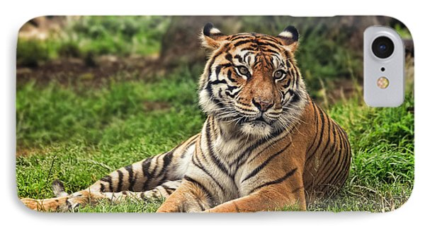 A Tiger Relaxing On A Cool Afternoon IPhone Case by Jim Fitzpatrick