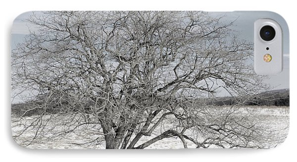 A Tree In Canaan Phone Case by Randy Bodkins