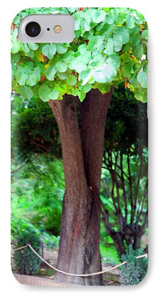 IPhone Case featuring the photograph A Tree Lovelier Than A Poem by Madeline Ellis