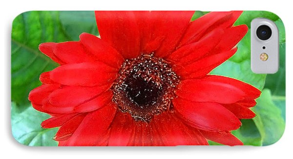 IPhone Case featuring the photograph A True Red by Sandi OReilly