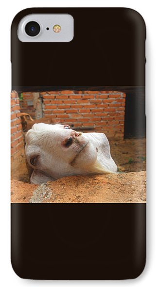 A Visit With A Smiling Goat IPhone Case by ARTography by Pamela Smale Williams