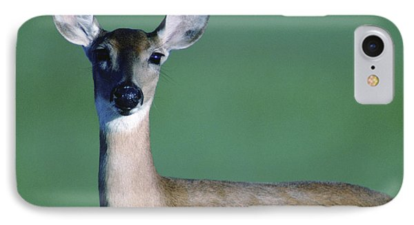 A White-tailed Deer On The Prairie IPhone 7 Case