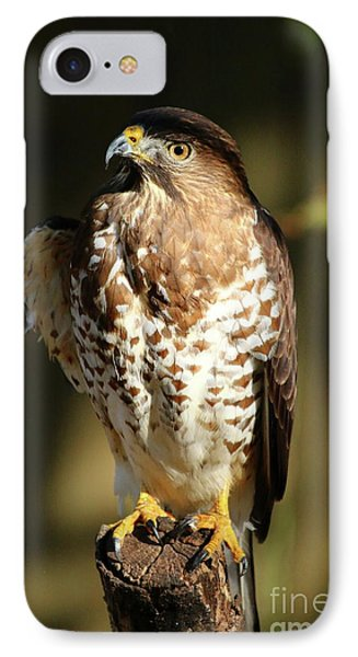 A Young Bird Of Prey IPhone Case by Christiane Schulze Art And Photography
