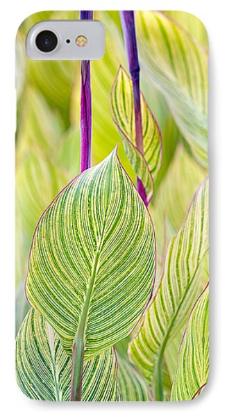 Abstracts In Nature IPhone Case