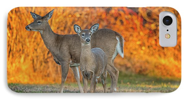 Acadia Deer IPhone Case by Darren White