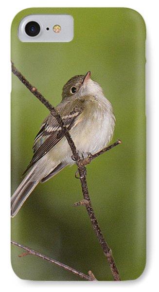 Acadian Flycatcher IPhone Case by Alan Lenk