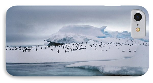 Adelie Penguins On Iceberg Weddell Sea IPhone Case