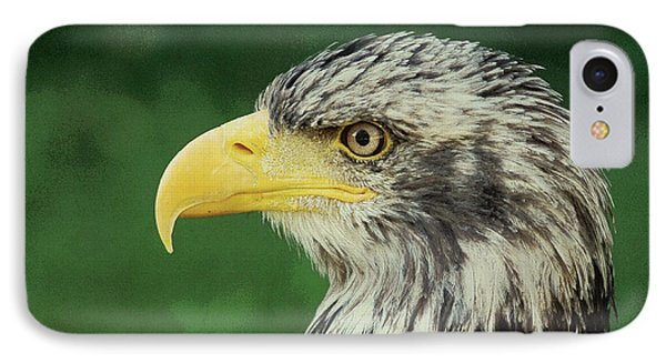 Adler Bald Eagle IPhone Case by Adam Asar