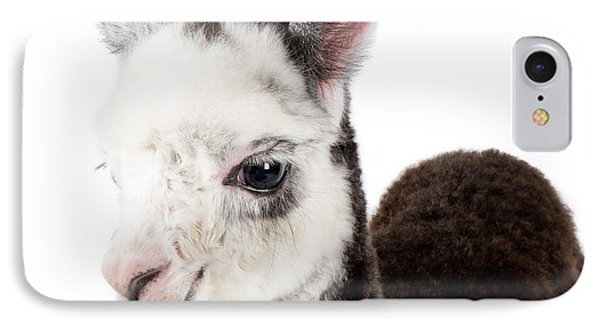 IPhone Case featuring the photograph Adorable Baby Alpaca Cuteness by TC Morgan