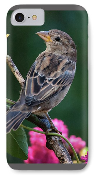 Adorable House Finch IPhone Case by Jim Moore