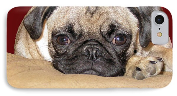 Adorable Icuddle Pug Puppy IPhone Case