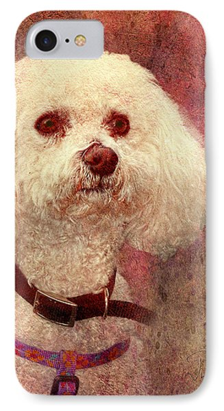 Adoration - Portrait Of A Bichon Frise  IPhone Case