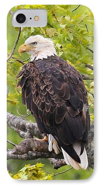Adult Bald Eagle IPhone Case by Debbie Stahre