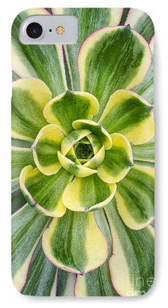 Aeonium Sunburst IPhone Case by Tim Gainey