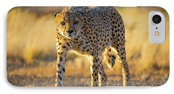African Cheetah IPhone Case by Inge Johnsson